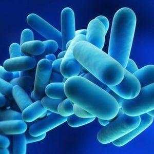 Legionellenprüfung Bakterien